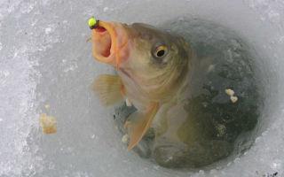 Как правильно ловить карпа на пруду в зимнее время?