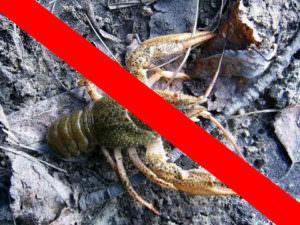 Ограничение на ловлю раков