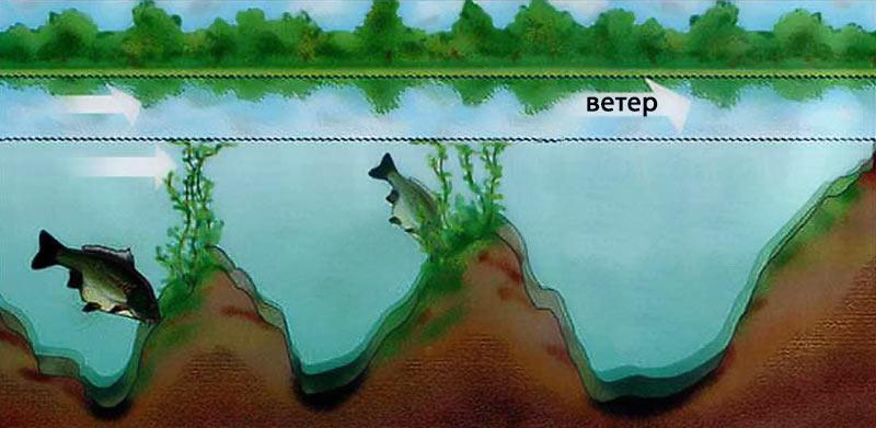 Поведение карпа под водой