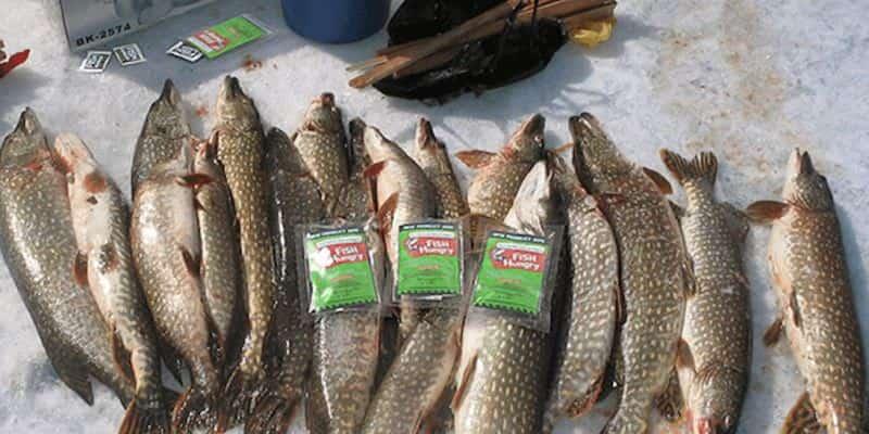 Активатор клева FishHungry: отзывы, покупка, инструкция