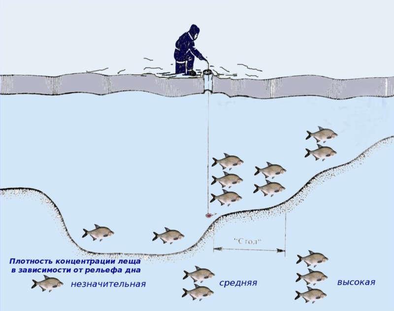 Поведение леща подо льдом