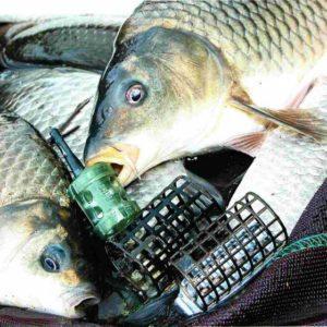 Рыба и кормушки
