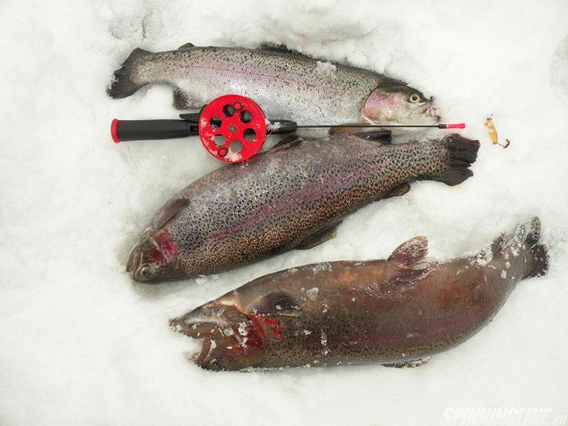 3 рыбы форели на снегу с удочкой