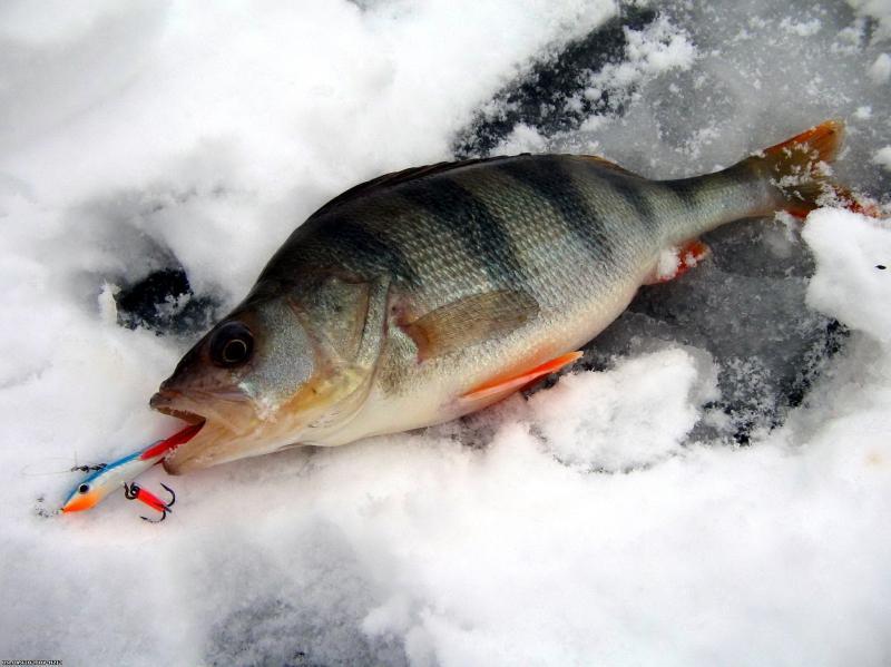 Ловля рыбы на мормышку с поплавком: кто кого перехитрит