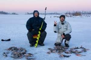 Рыболова наловили окуня