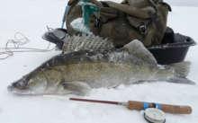 Судак рыба на льду
