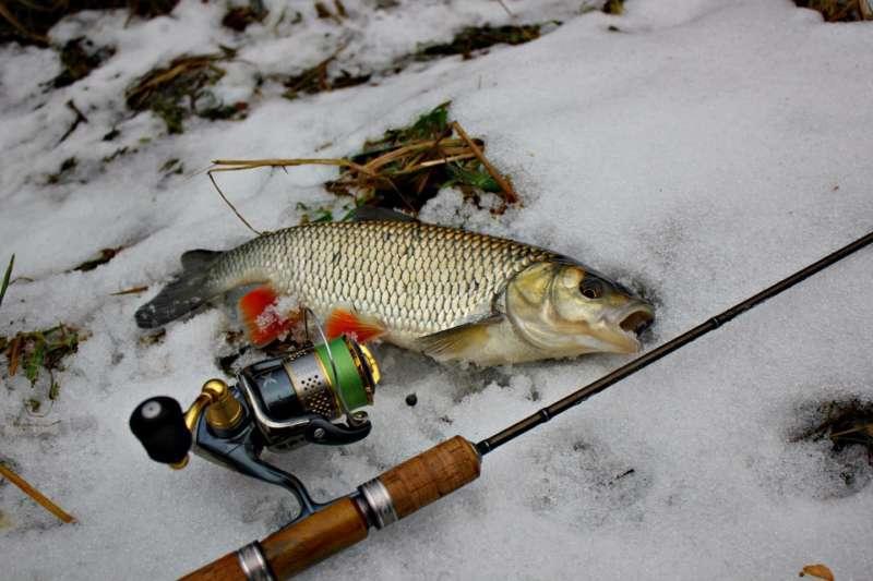 Ловля голавля зимой: 1) на малой реке с течением, 2) со льда