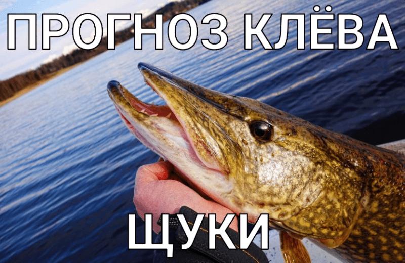 Прогноз клёва щуки от F1sh1ng.ru