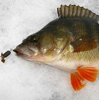 Зимняя рыбалка - полное руководство 2021