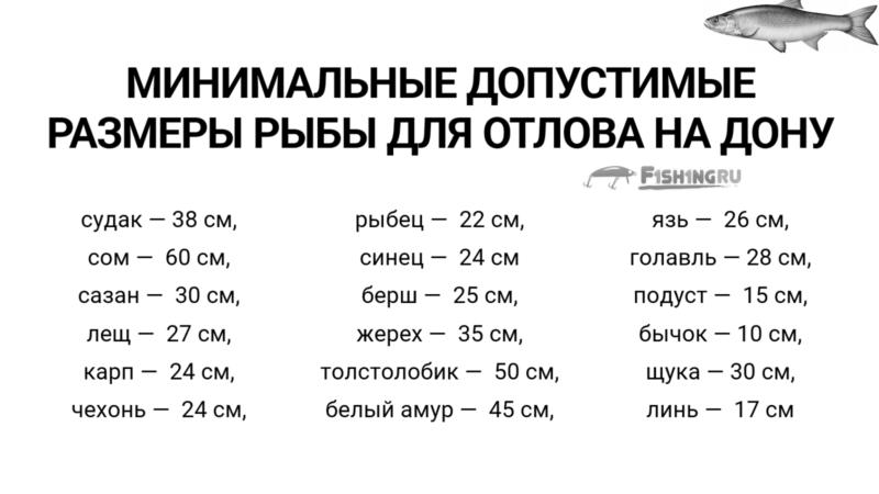 Запреты на ловлю рыбы на Дону, размеры. f1sh1ng.ru