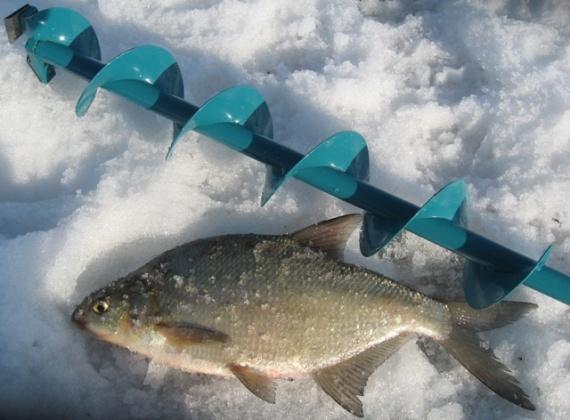 Лещ зимой 2019 года - ловля на течении, водохранилище, со льда: снасти для успешной рыбалки