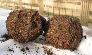Рецепт прикормки для плотвы зимой