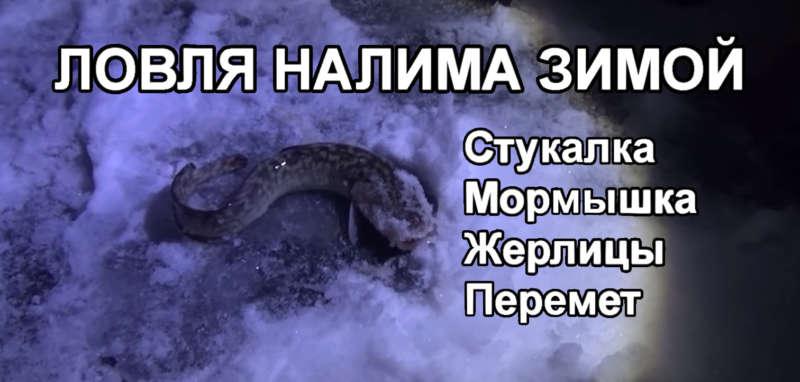 Ловля налима на перемет зимой: видео. Где поймать налима{q}