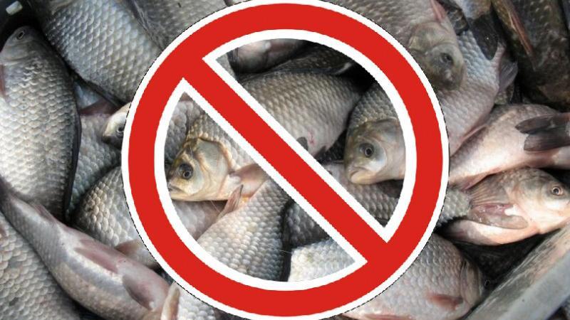 Запрет на вылов рыбы