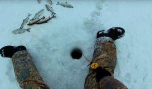 Ловля пеляди зимой