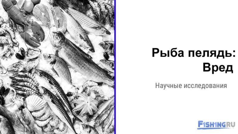 Вред рыбы пелядь