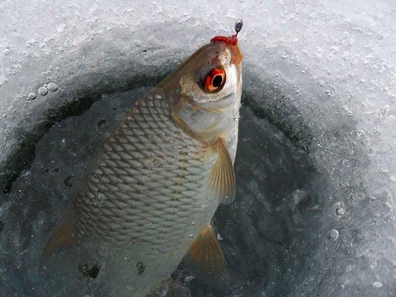Как правильно ловить на мормышку зимой