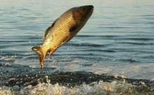 Когда начинает клевать рыба: карп, щука, лещ, сазан, плотва, сом, линь, окунь