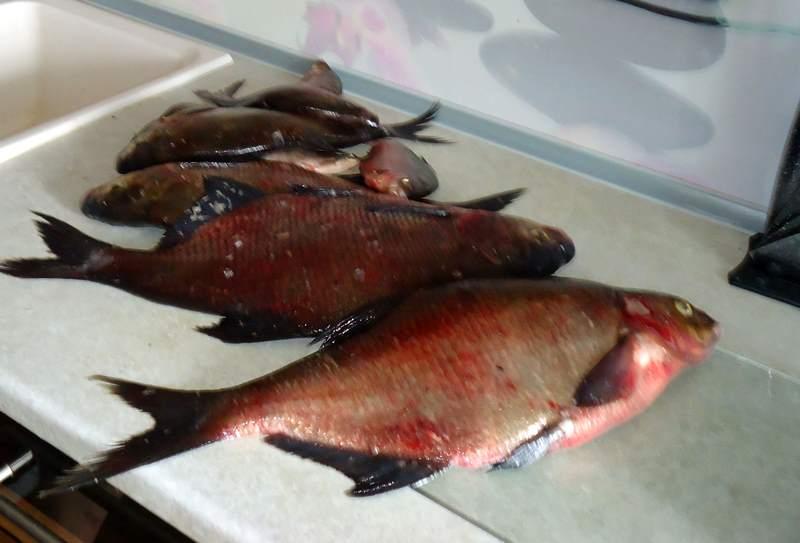 Отзыв рыбака ловля леща озеро Бисерово в Подмосковье