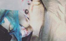 Отчет о рыбалке на поплавок