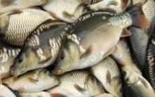 Прогноз рыбалки на 5 дней