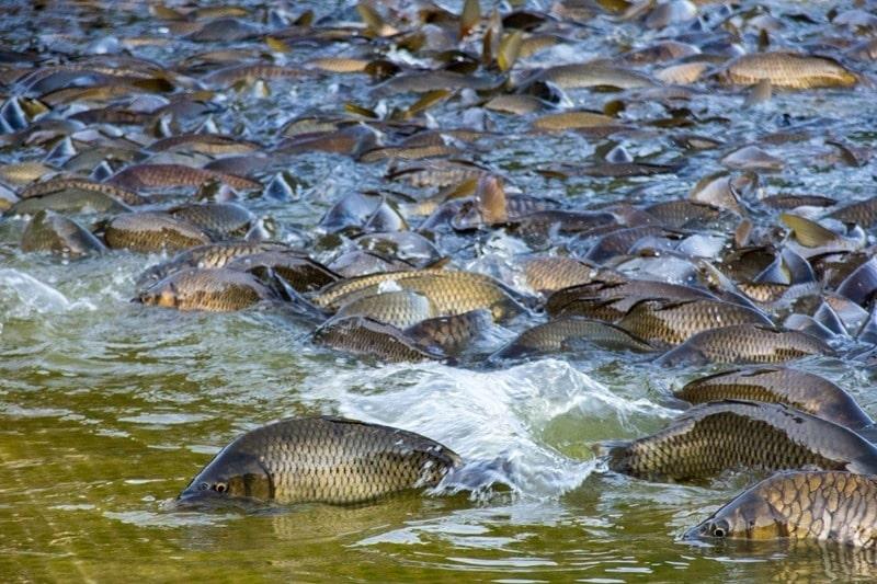 Прогноз рыбалки на сегодня, 5 дней, неделю