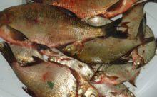 Отчет о рыбалке в Нижегородской области на леща и подлещика