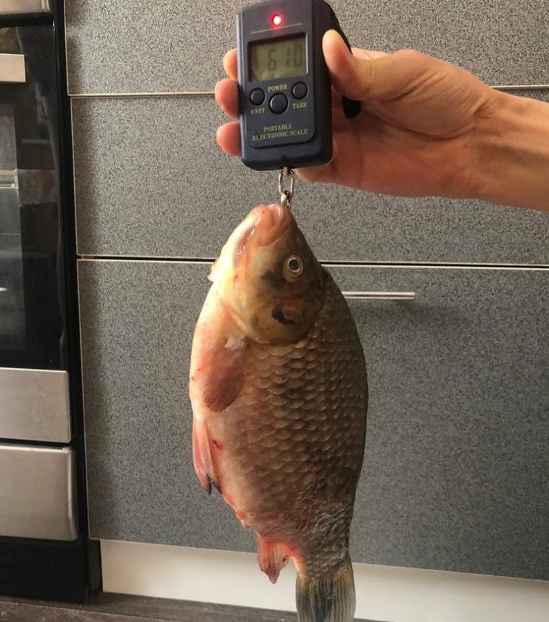 Отчет о рыбалке на карася Омская область озеро Тунис