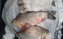Отчет о рыбалке Омская область озеро Тунис