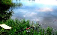 Прогноз клева рыбы в Подмосковье - Московской области