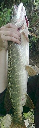 Отчет о рыбалке на щуку Кемеровская область