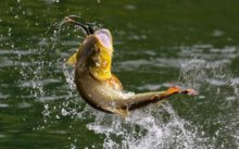 Стоит ли ехать завтра на рыбалку, будет ли клев рыбы