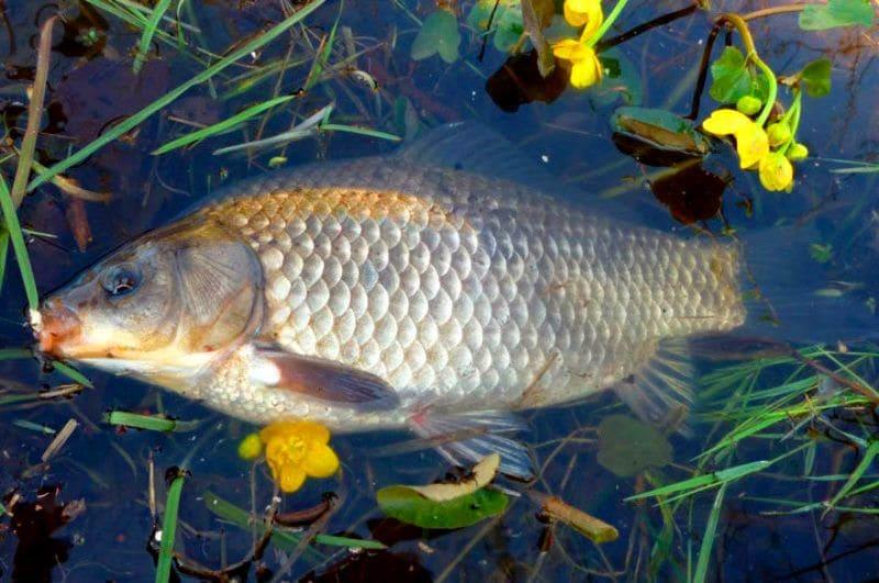 Рыбалка на карася весной на удочку, поплавок, фидер, март, апрель, май