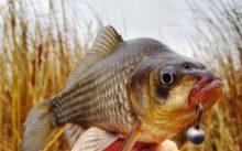 Рыбалка на карася осенью в сентябре, октябре, ноябре, приманка и снасти