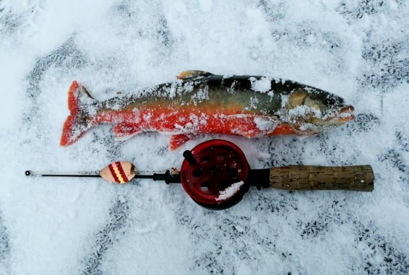 Голец что за рыба, где водится, польза и вред, как приготовить, фото