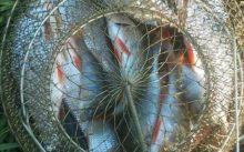 Отчет о рыбалке на реке Клязьма Владимирской области
