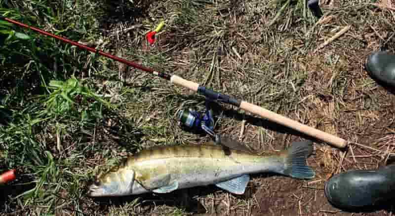 Запрет на спиннинг, можно ли ловить в нерестовый запрет