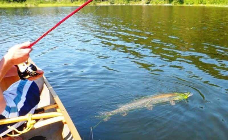 Когда можно ловить на спиннинг 2021 щуку с лодки и с берега весной