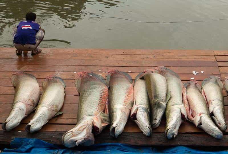 Календарь клева рыбы на год, неделю